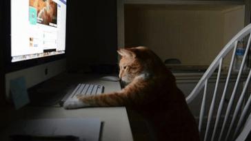 gato usando una computadora