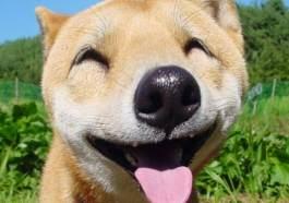 Perro sonriendo fotos de perros graciosos