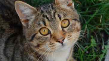 tipos de lombrices en gatos