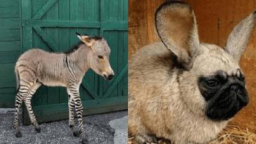 animales híbridos más raros del planeta