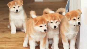 como evitar ser estafado al comprar un perro