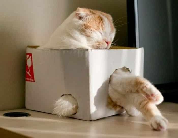 posiciones de gatos al dormir