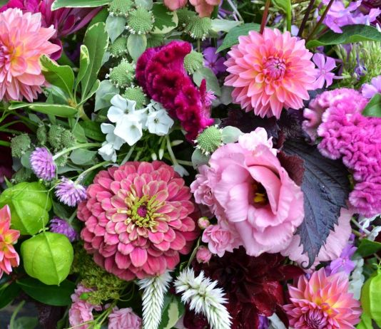 Beautiful Blossoms for your Garden