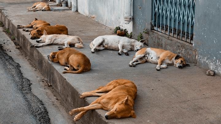 Rusia elimina a perros callejeros para elMundial