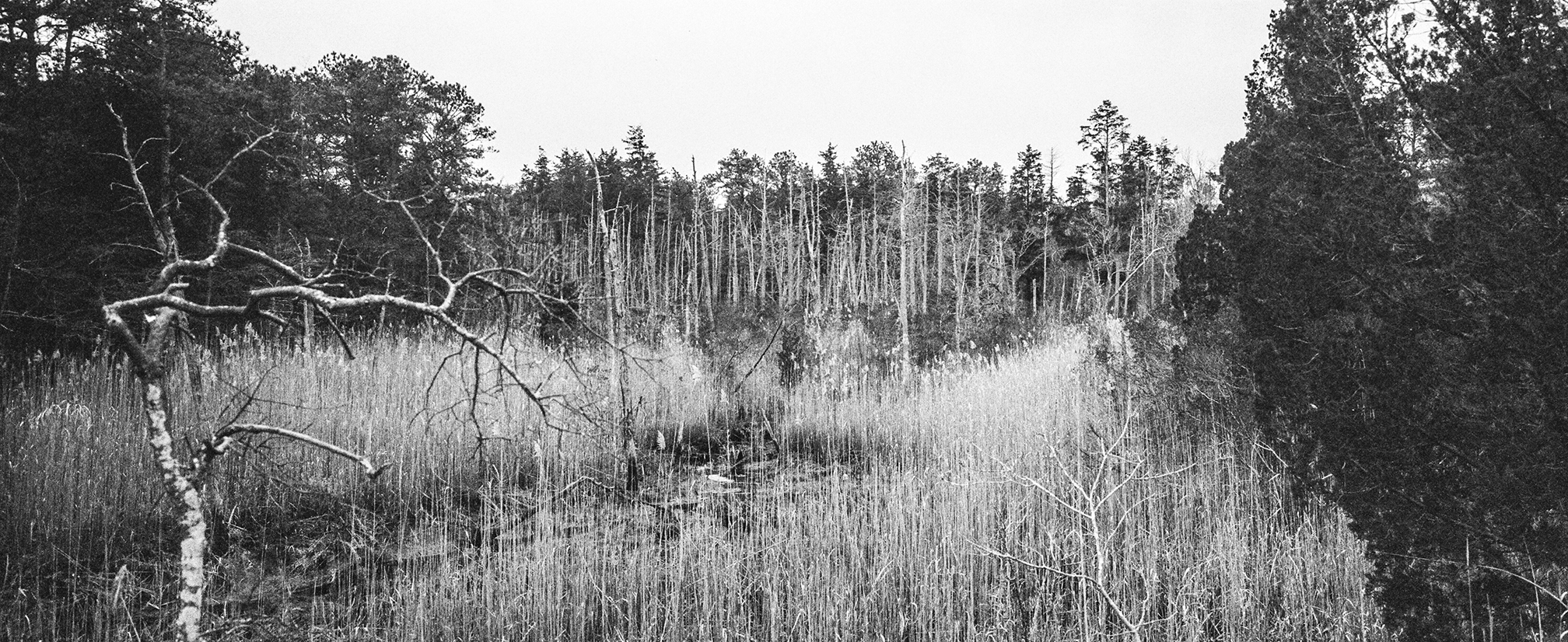 Ghosts of the Pine Barrens