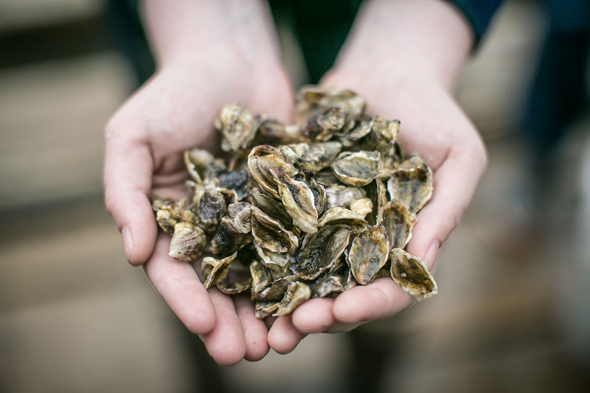 "Diani Taylor, Bill's daughter who's studying for the bar exam, holds oyster seed, the key to the family business. Bill Taylor's bottom line: ""Without seed, you're not in business any longer."""