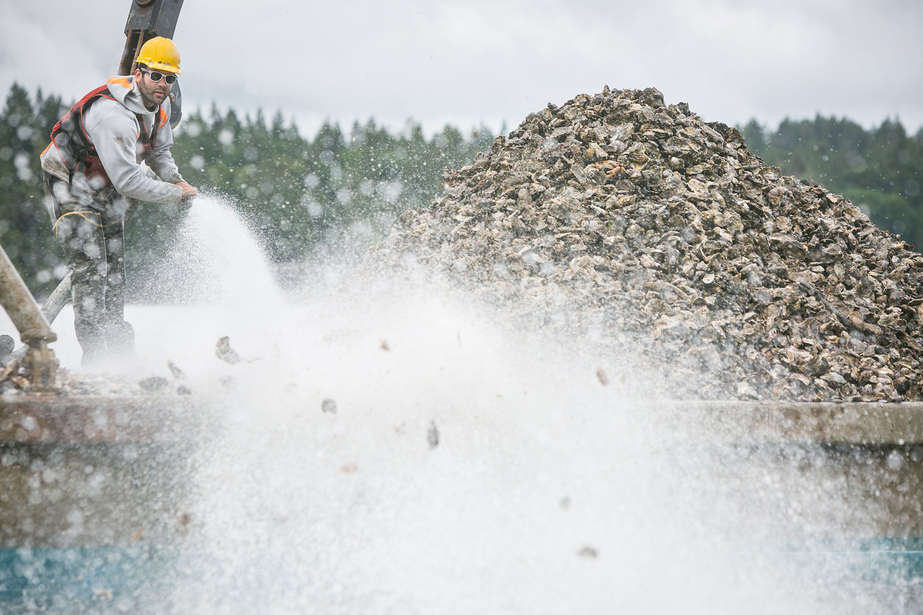 Using a hose, Adam Kravitz transplants oysters from one area to another in Mud Bay near Olympia, Washington, at one of Taylor Shellfish's many farms in Puget Sound.