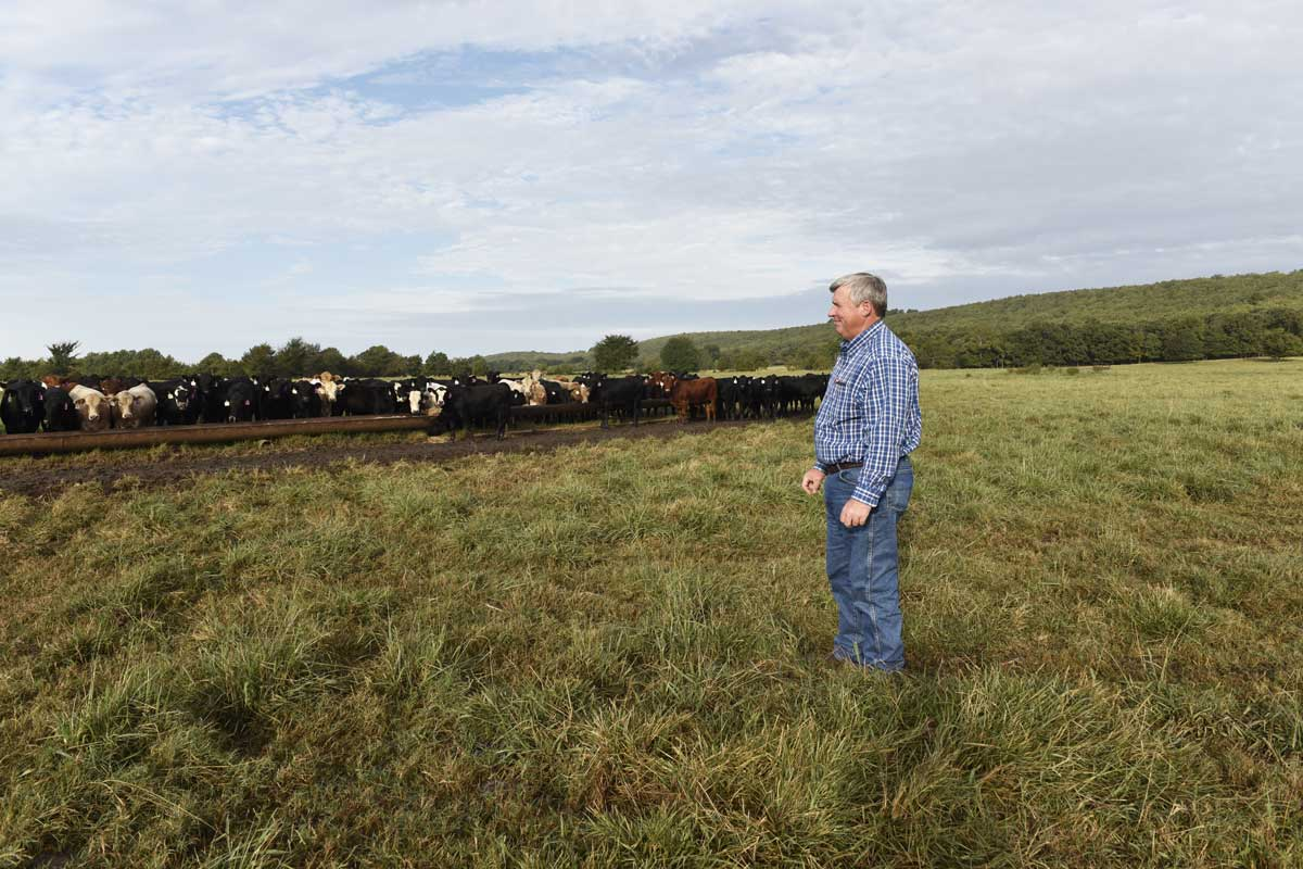 Earl Shero watches while his cattle feed on his ranch in Wilburton.