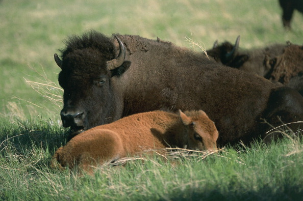 Bison: The Latest in Carbon Capture Tech