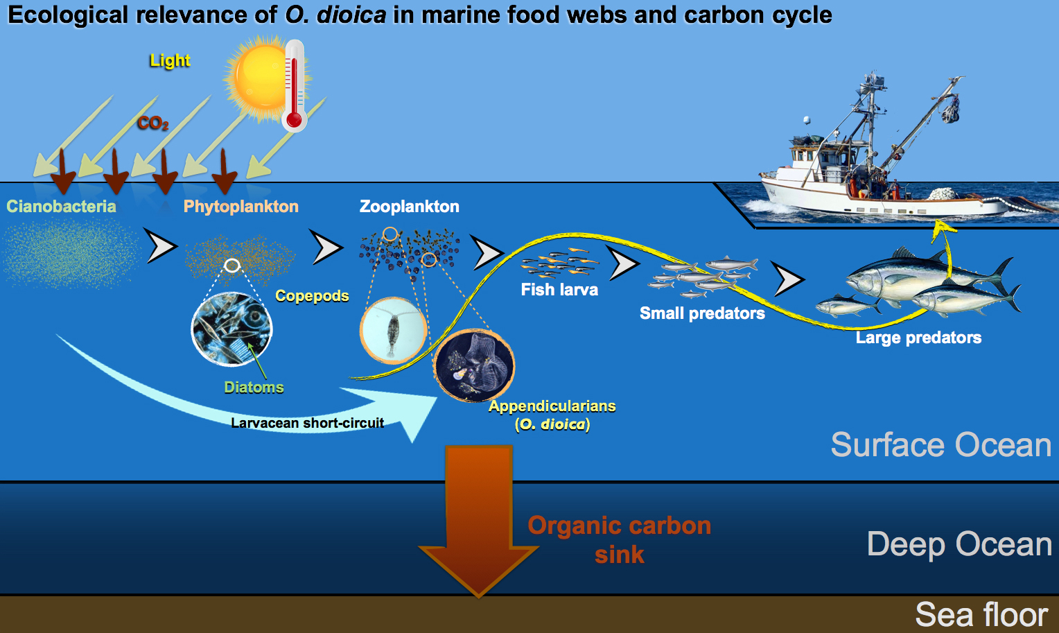 Are Marine Embryos Ready To Respond To Climate Change