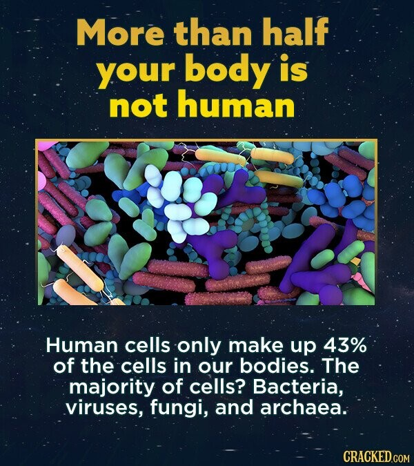 More than half your body is not human Human cells only make up 43% of the cells in our bodies. The majority of cells? Bacteria, viruses, fungi, and archaea. CRACKED.COM
