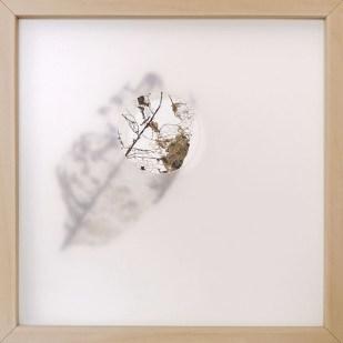 oltre la nebbia 3, 2020 - foglia vera su carta e foglio traslucido forato - 25 x 25 cm