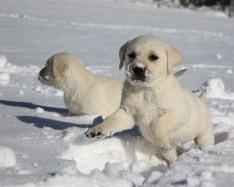 Snow Puppies 6
