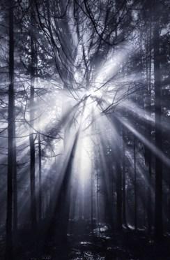 The Dark Forest 10