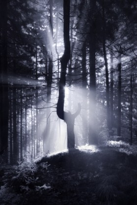 The Dark Forest 3
