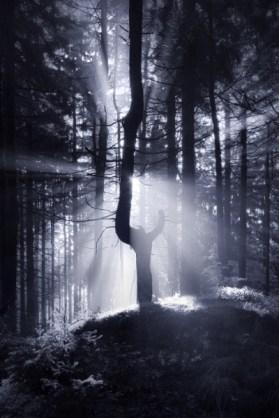 The Dark Forest 3