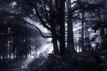 The Dark Forest 5