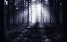 The Dark Forest 6