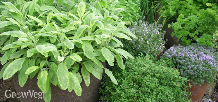 How To Grow Delicious Herbs In Pots