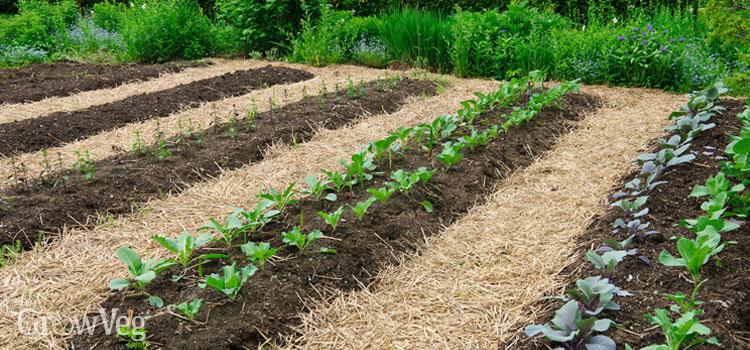 No Till Gardening An Easier Way To Grow