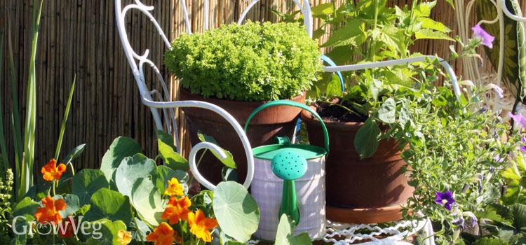 Grow An Edible Garden On Your Balcony