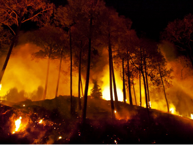 Image results for forest fire