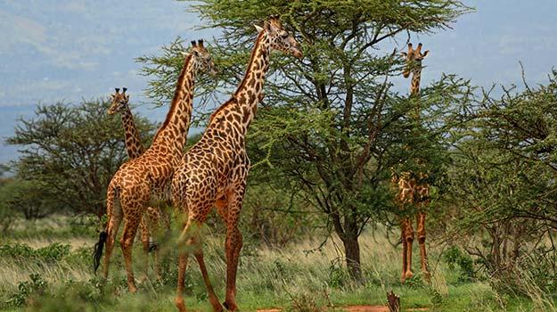 28-Kenya-shutterstock_362464157