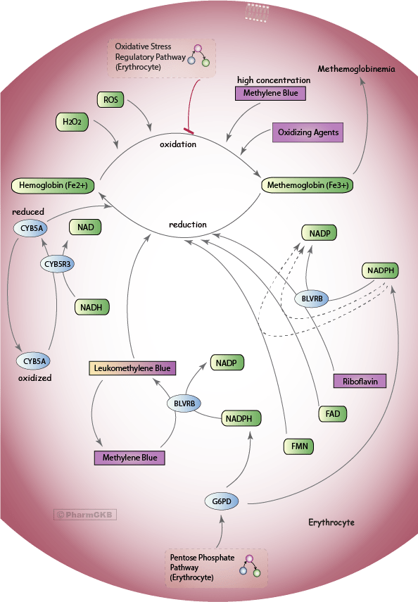 Methylene Blue Pathway, Pharmacodynamics
