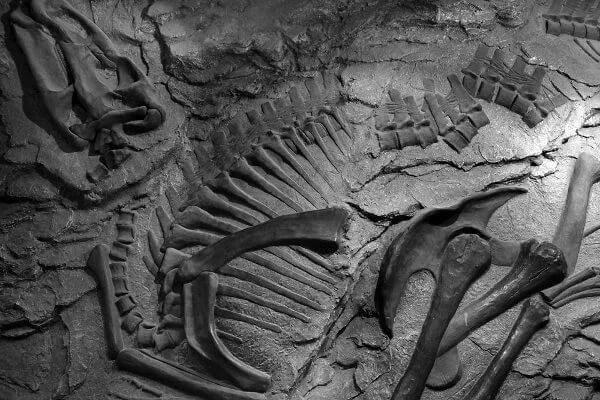 A Evolução é uma área da Biologia que nos permite compreender melhor como os organismos mudaram ao longo do tempo.