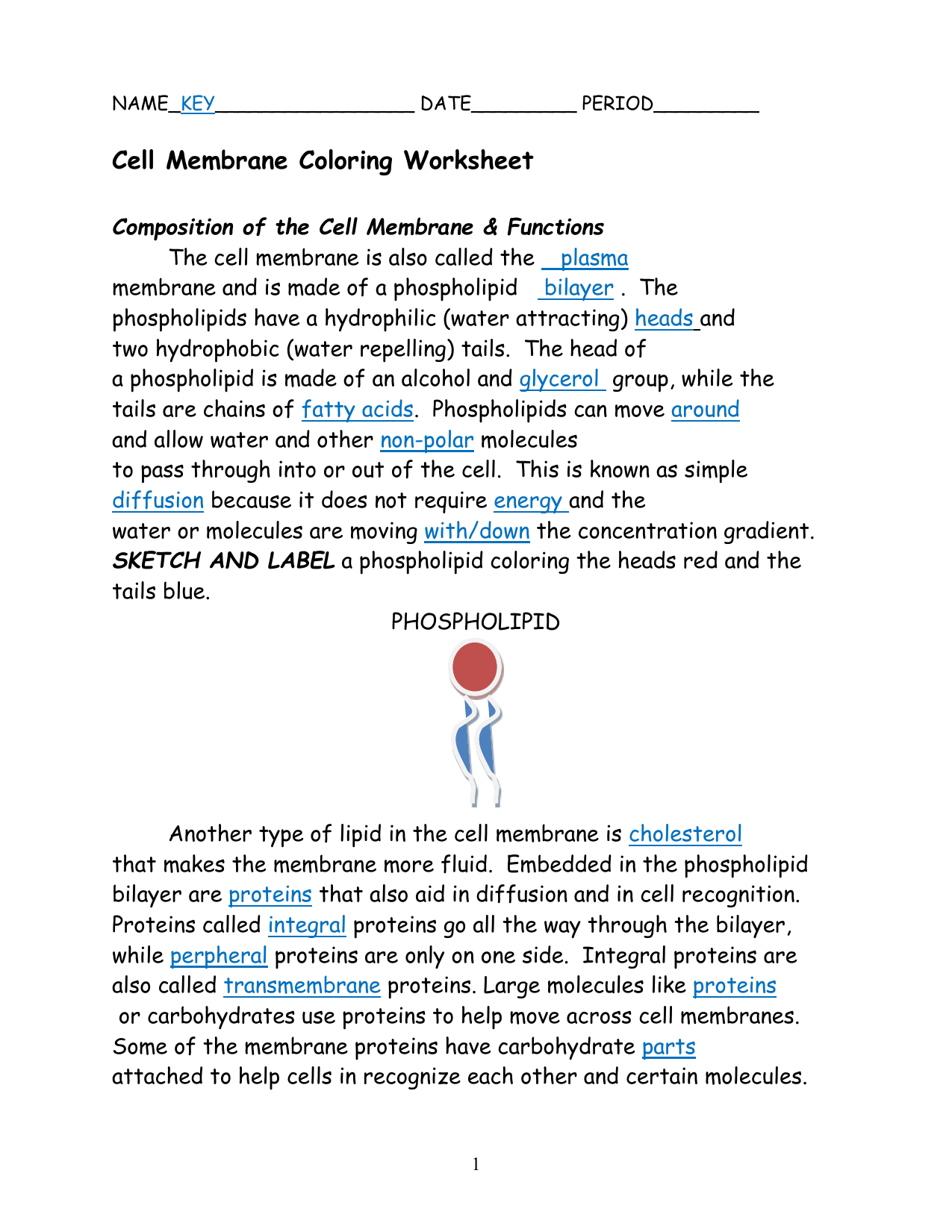 Cell Membrane Coloring Worksheet Key