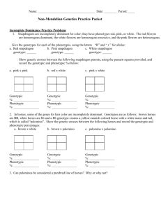 X Linked Traits Genetics Worksheet C