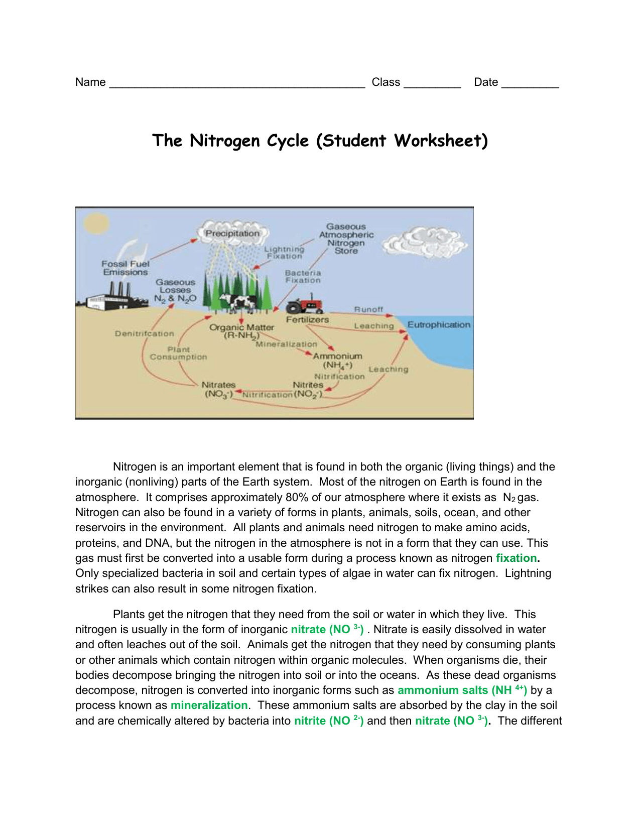 The Nitrogen Cycle Student Worksheet