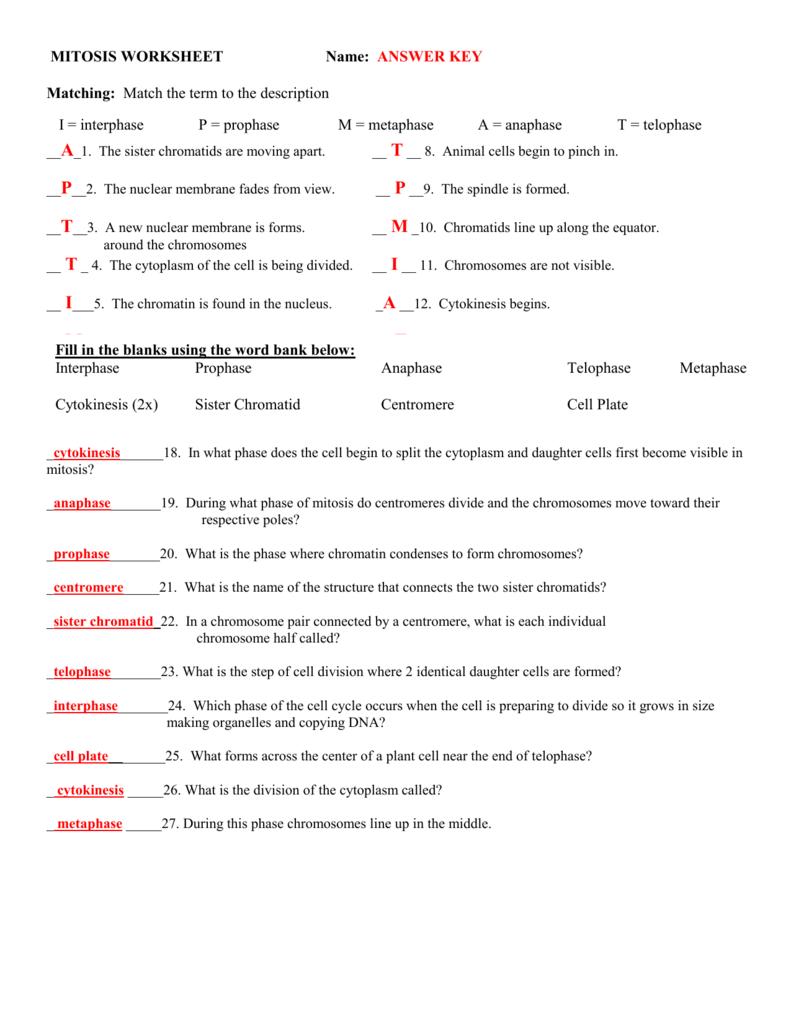 Mitosis Worksheet
