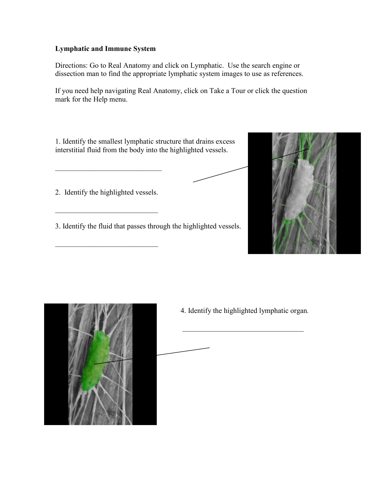 Lower Limb Skeletal Anatomy Worksheet