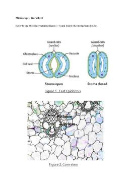 Paramecium Ppt