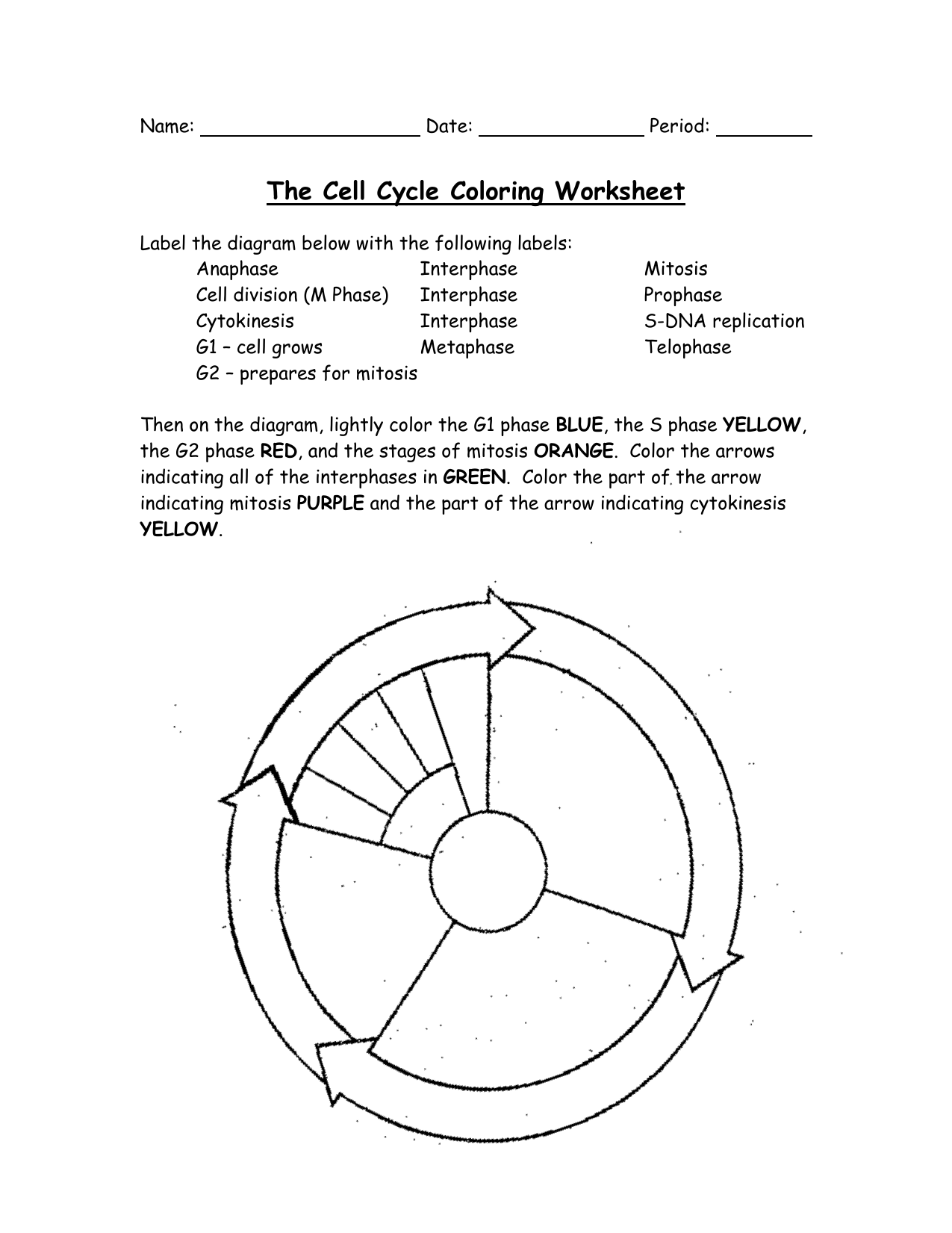 The Cell Cycle Coloring Worksheet Answers Free Printable