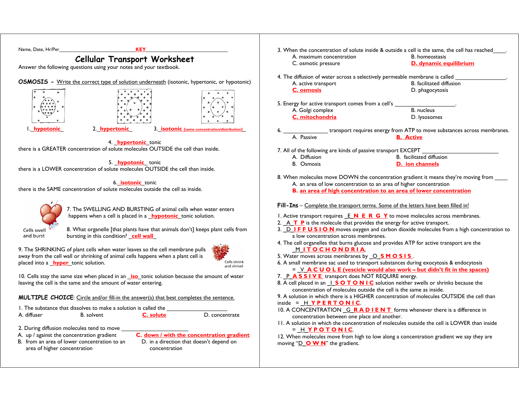 Cellular Transport Worksheet