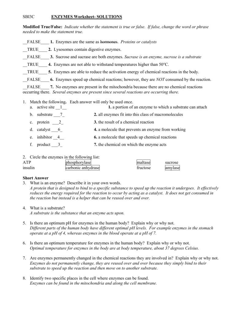 Sbi3c Enzymes Worksheet Solutions Modified True False
