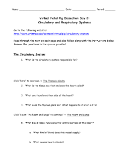 Circulatory and Respiratory System Test Review