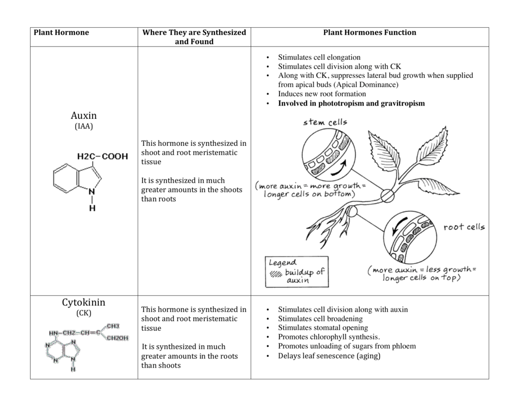 Plant Hormones Worksheet Answers