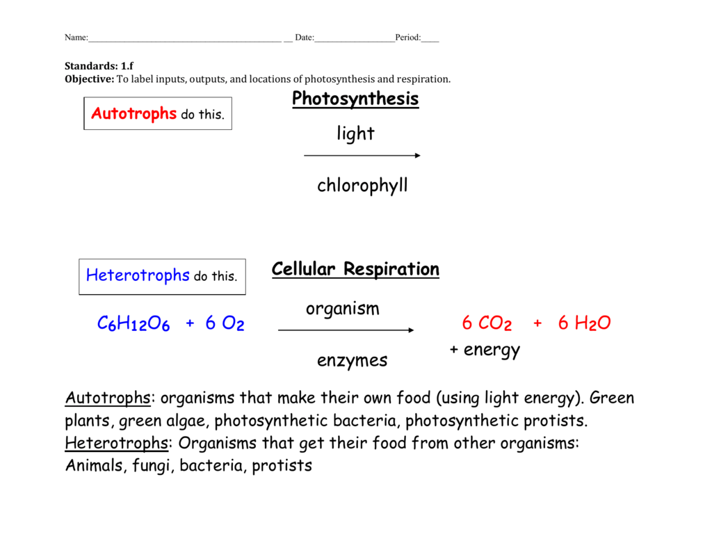 Inputs And Outputs Of Cellular Respiration