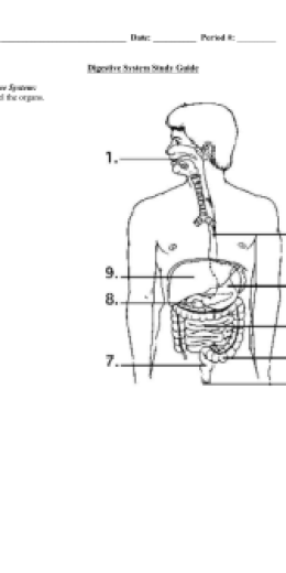 Anatomy Quiz - Digestive System