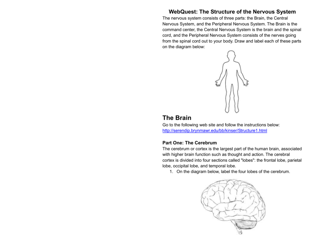 Label The Brain Answers