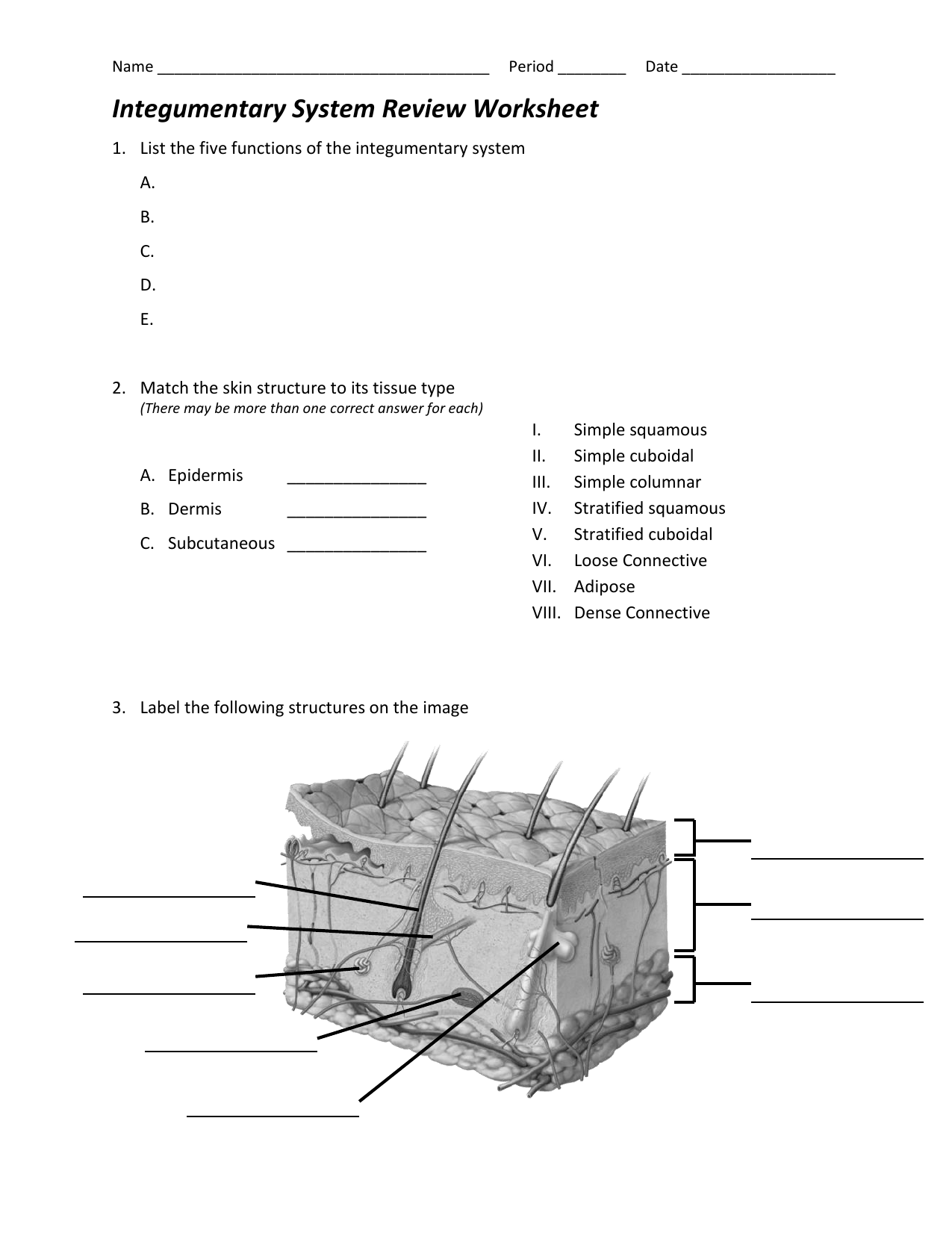 Integumentary System Diagram Worksheet