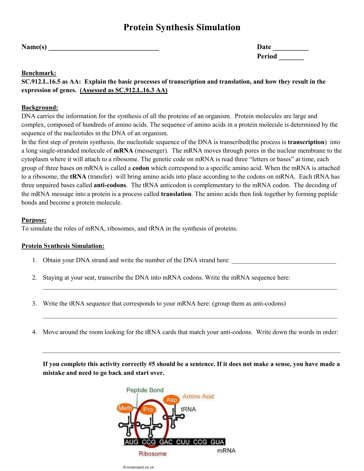 Protein Synthesis Simulation Worksheet Answers