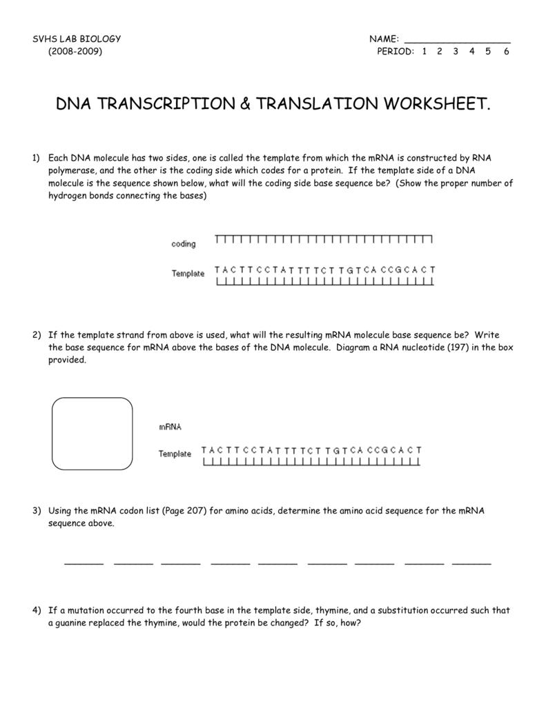 Dna Transcription Translation Worksheet