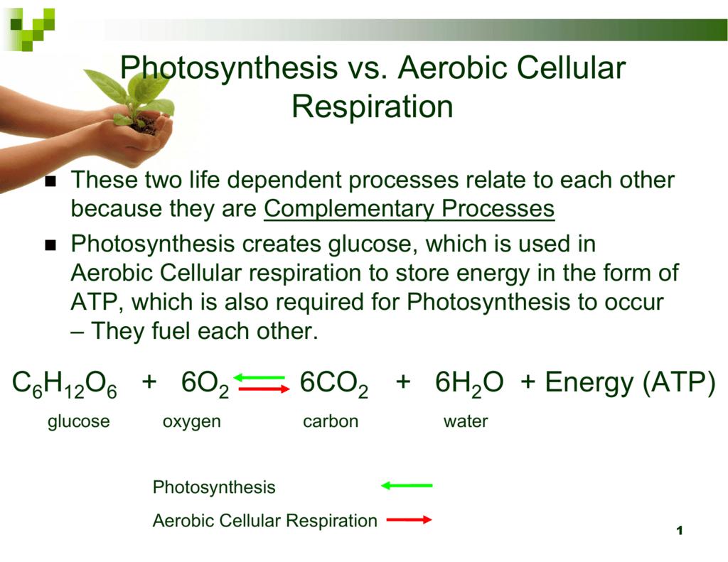 Photosynthesis Vs Aerobic Cellular Respiration