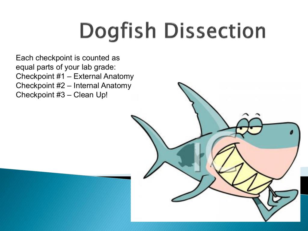 Labeled Shark External Anatomy