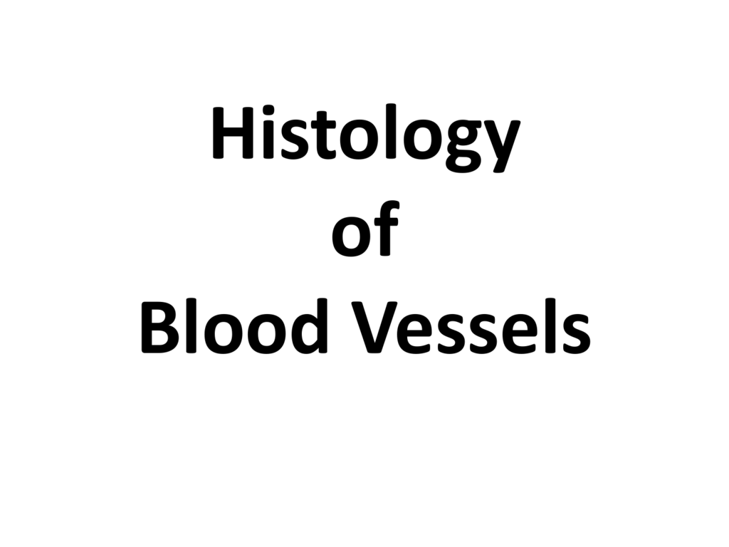 Histology Of Blood Vessels Ppt