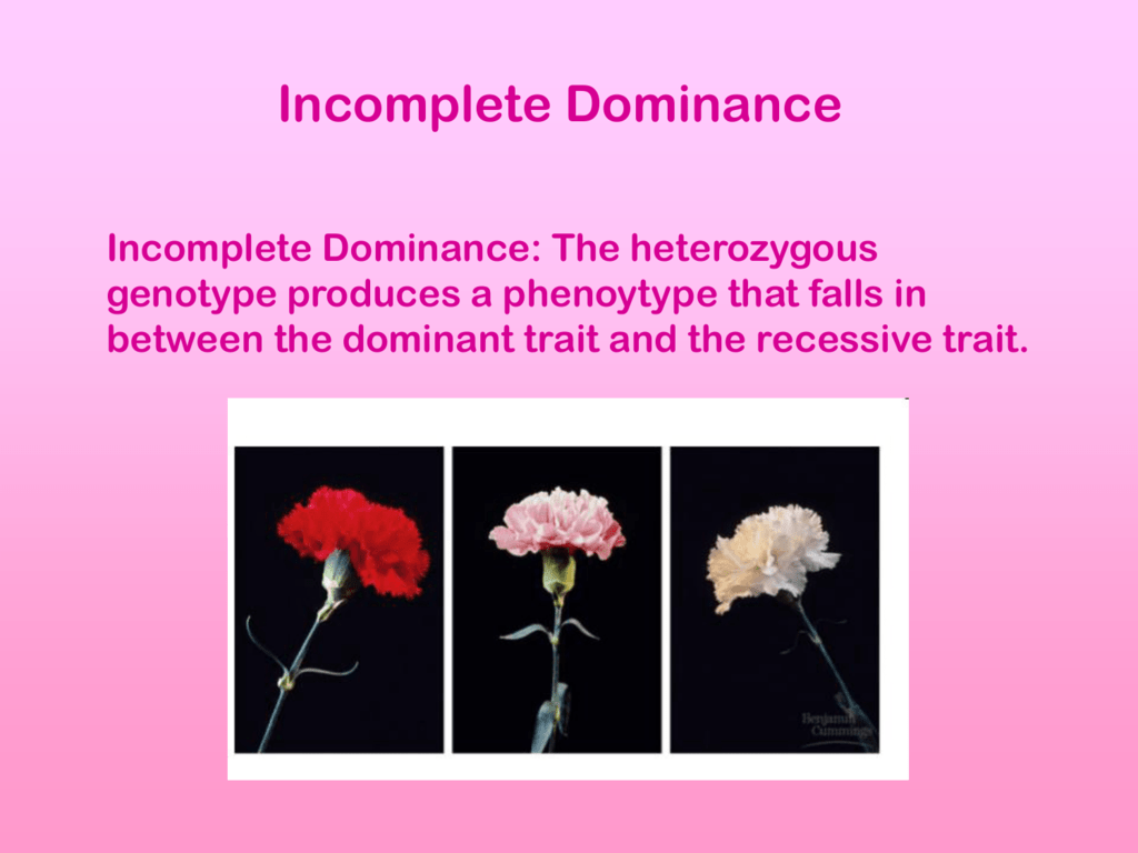 Incomplete Dominance Ppt